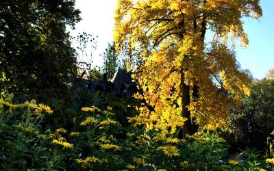 Düngen im Herbst?