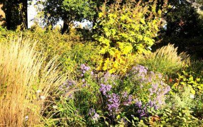 Herbststauden